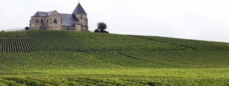 champagne-vineyard-10000853